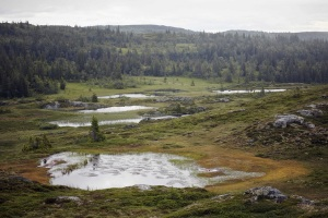 Landscape near Faviken